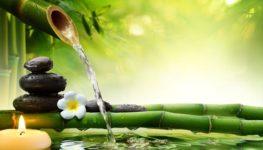 Zlepšite vaše Feng Shui, zdravie a bohatstvo s Lucky Bambusom