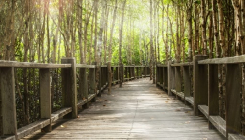 dreveny most