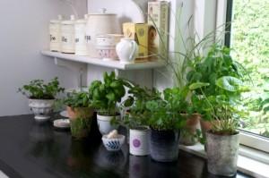 Kuchyňa ako centrum zdravia