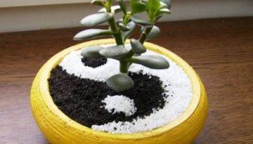 tucnolist a yinyang